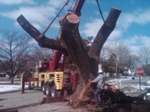 Crane Removal Lyndon