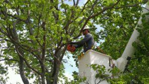 Tree Trimming Topeka Emporia
