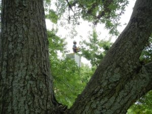 Tree trimming and pruning Emporia Topeka