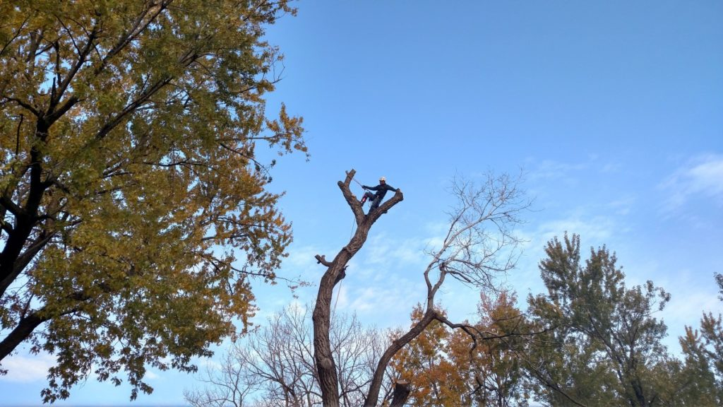 Topeka Tree Removal