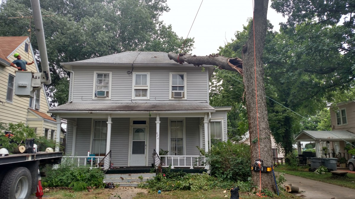 Tree on House Removal