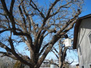 Tree Trimming in Emporia